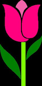 pink-tulip-leaves-askew-hi