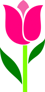 pink-tulip-leaves-askew-hi
